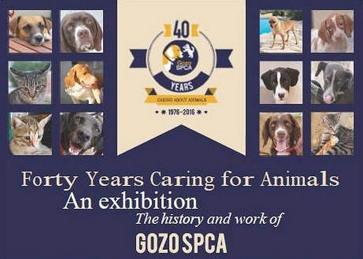 Celebrating 40 years of caring for animals: Gozo SPCA Exhibition