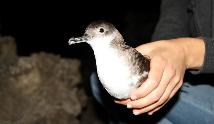 BirdLife Malta launches its third EU-funded project