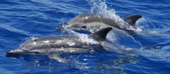 International Common Dolphin Workshop highlights conservation