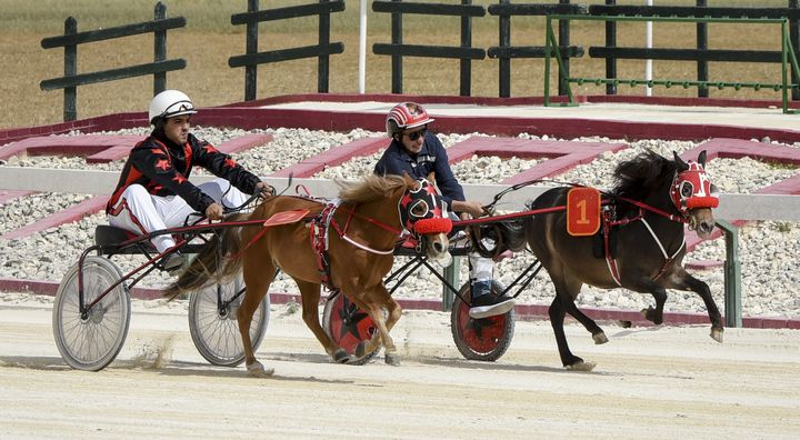 Programme of 16 horse races this Sunday at Xhajma Racetrack, Gozo