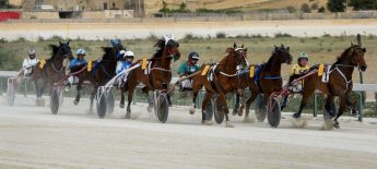 Programme of 16 horse races this Sunday at Xhajma Racetrack, Gozo