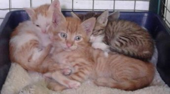 Gozo SPCA need loving homes for kittens at their Centre