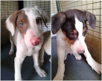 Harry and William, 2 adorable puppies looking for loving homes