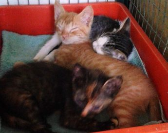 Kittens of all sizes & colours in need of loving homes at Gozo SPCA