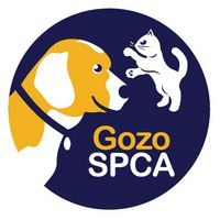 Gozo SPCA not able to take in, or rehome kittens due to ringworm
