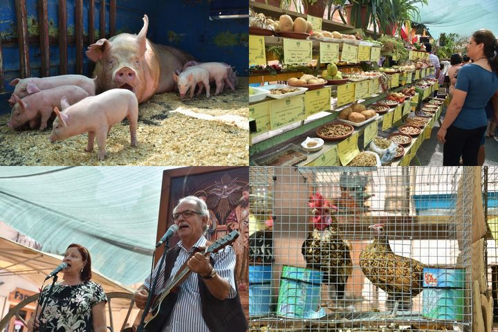 Nadur Agricultural Fair: Local farm produce, food, crafts and much more...