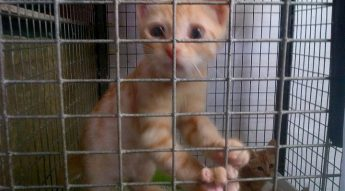 Loving homes urgently needed for kittens: Gozo SPCA Open Morning