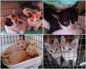 Playful, lovable kittens waiting for loving homes at Gozo SPCA