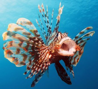 Ongoing research finds new alien species in Maltese waters
