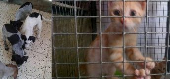 Gozo SPCA urgently need homes for dogs & kittens at their Centre
