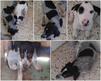 John, Jack, Jane & Julie: 4 puppies waiting for loving homes at Gozo SPCA