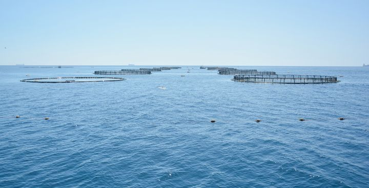 2 of the 4 fish farm operators fully compliant with declaration - PA