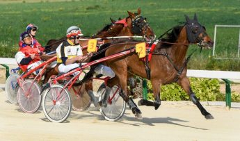 Gozo Horse Racing Association local racing season starts Sunday