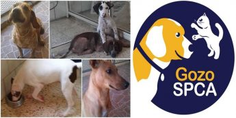 Gozo SPCA fundraising collections on the ferries next weekend