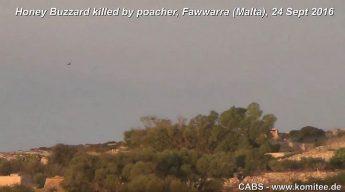 CABS film buzzard shot down by hunter - 50 illegal bird callers found