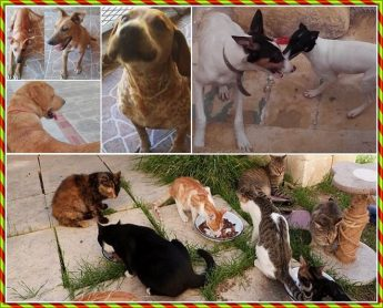 Help the animals at Gozo SPCA with a sponsorship for Christmas