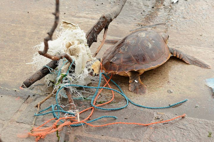 Dispose of waste responsibly, marine debris increasing in Maltese waters - NTM