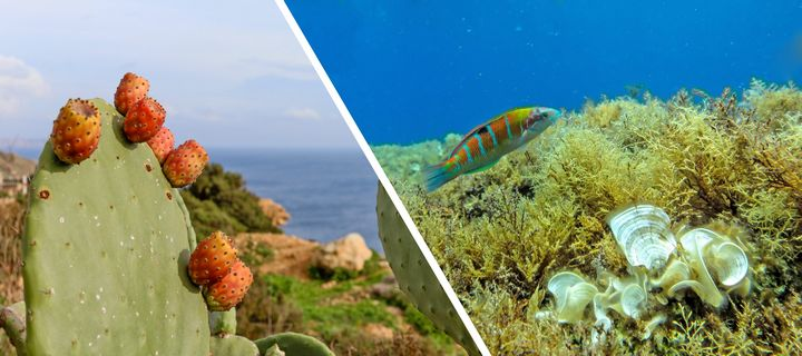 Mediterranean is the fountain of youth, UoM-led study reveals