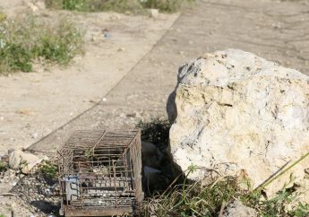 Gozo has greatest concentration of trapping sites - CABS