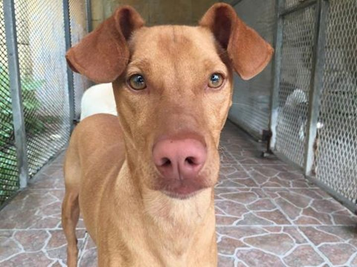 Buddy is at Gozo SPCA waiting for his own forever home