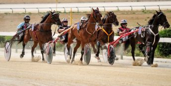 Gozo Horse Racing Association's final races of the season this Sunday