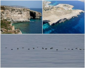Marine protected areas need to be upheld, says BirdLife Malta