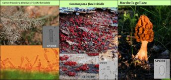 EcoGozo discovers completely new species of fungi from Gozo