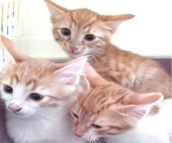 Kittens urgently needing loving homes at Gozo SPCA