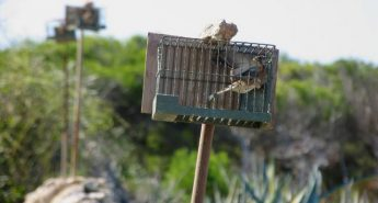 "Trapping arrangements ""do not respect Malta's obligations under EU law"""