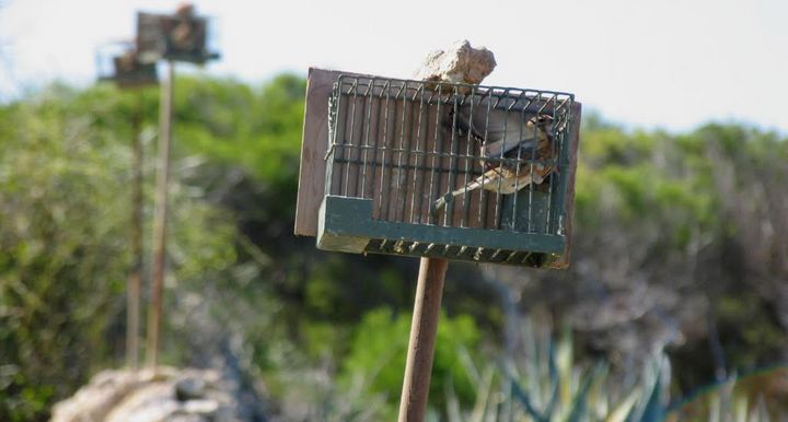 European Court of Justice judgement decides on no more trapping in Malta
