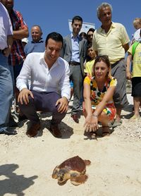 Luca the loggerhead turtle released back to the sea at Hondoq