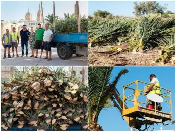Palm fronds being distributed free of charge to Gozitan fishermen