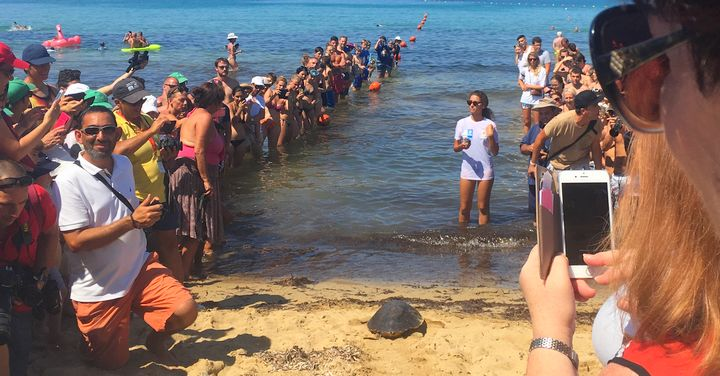 NTM successfully releases 3 more turtles after months of rehabilitation