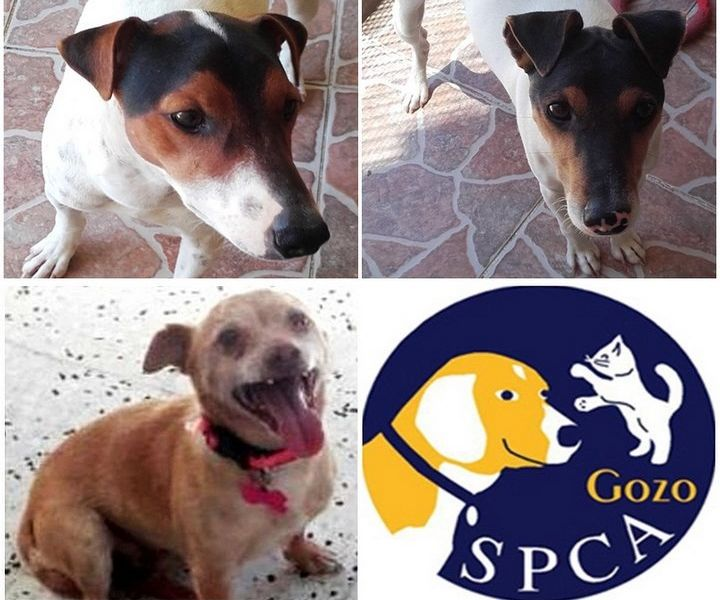 Gozo SPCA annual fundraising collection starts Friday on Gozo Channel