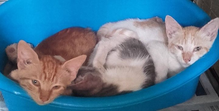Gozo SPCA kittens waiting for loving homes