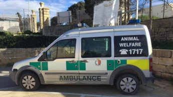 Animal Welfare Centre Gozo undergoing urgent maintenance works