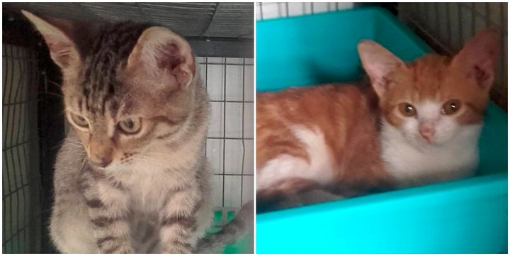 Gozo SPCA urgently needing homes for playful kittens and dogs