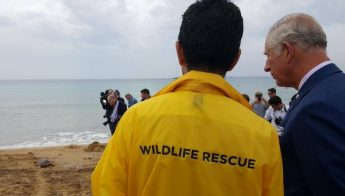Prince Charles oversees release of three rehabilitated turtles