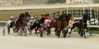 Gozo Horse Racing Association full programme of races tomorrow