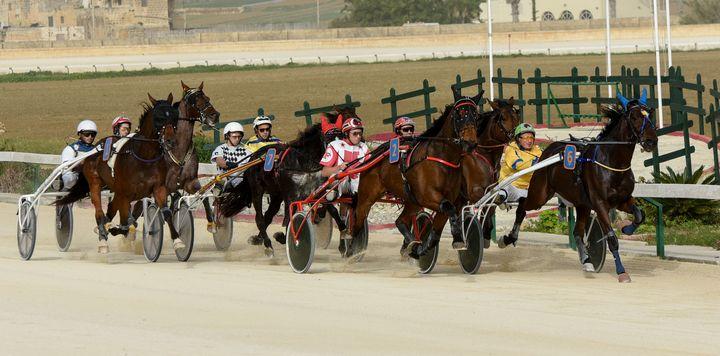 Gozo Horse Racing Association full programme of races tomorrow