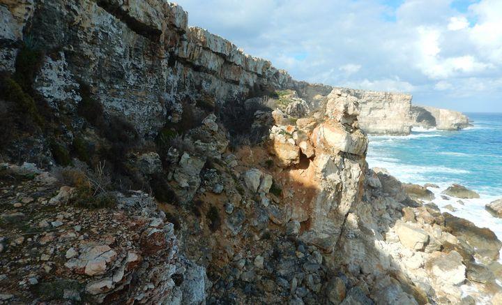 First Mediterranean Storm-petrel nestling on Malta - BirdLife Malta