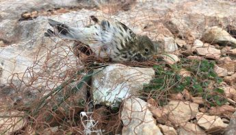 """Law and order in Malta's countryside inexistent,"" states BirdLife Malta"