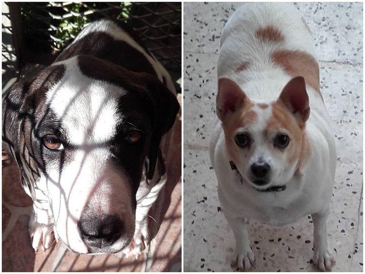 Gozo SPCA sponsorship and membership - the ideal Christmas presents