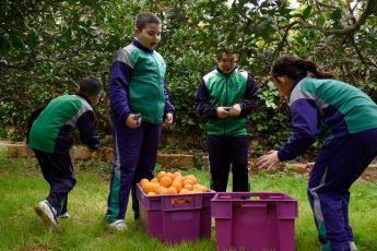 Citrus Festival 2018 launched in aid of Animal Welfare NGOs