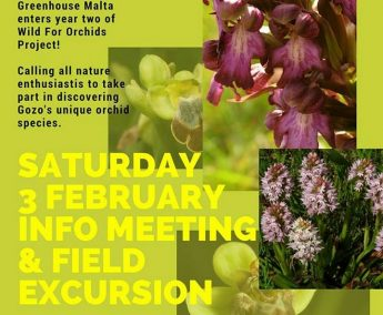 Wild for Orchids: Gozo information meeting and field excursion