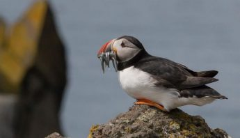 Majjistral Park talk by Chris Cachia Zammit on the nature of Scotland