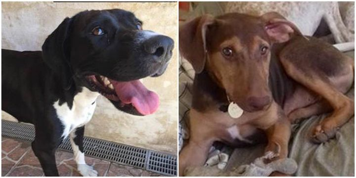 Queenie and Roony are two young dogs waiting for forever homes