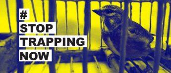 BirdLife Malta launches new stoptrappingnow campaign