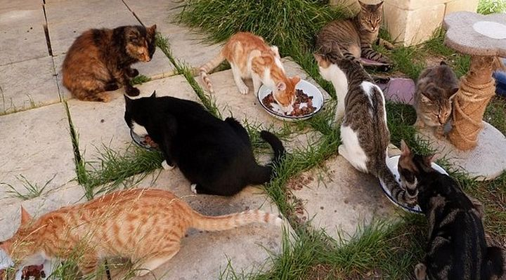 2 tri-coloured cats abandoned at Gozo SPCA in need of homes