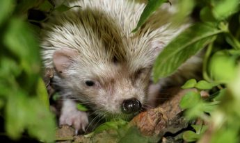 NTM commemorates World Wildlife Day - Help save hedgehogs